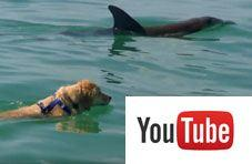 Dolphin plays with dog