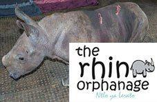 J'aime the rhino orphan