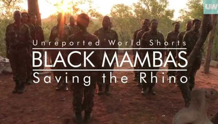 The Black Mambas