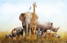 safari animals standing together in a grasslands
